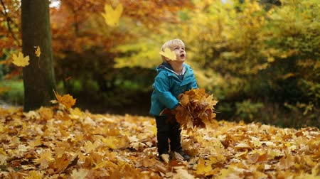 parkland : Childhood moments: boy tosses maple leaves. Full body shot. Selective focus. Slow motion.