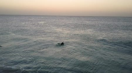Pair of surfers swimming in the Atlantic Ocean at dawn. Fuerteventura, Canary Islands, Spain. Aerial shot.