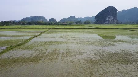 ninh : Rice fields and a mountain range in the distance filmed from a low flying drone. Wide shot. Stock Footage