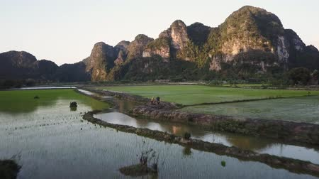 ninh : Flight over a rice field towards a limestone mountain at sunset in Ninh Binh, Vietnam. Wide shot. Drone shot. Stock Footage