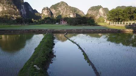 ninh : Flying over a paddy field in Ninh Binh, Vietnam. Morning light reflects off the waters as a worker works in the water. Limestone karst mountains in the background. Aerial shot.