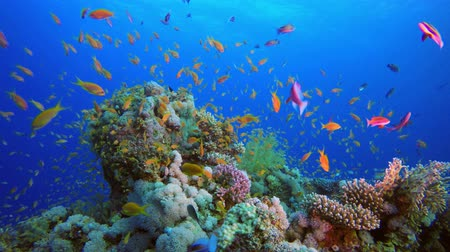 vízi : Underwater sea fish. Tropical reef marine. Colorful underwater seascape. Soft-hard corals seascape. Reef coral scene. Coral garden. underwater ambience coral reefs.