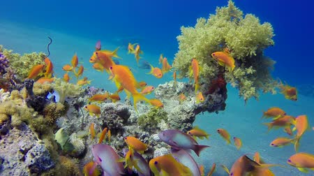 brócolis : Colorful Tropical Reefs Broccoli and Scalefin. Fish scenery, Soft-hard corals seascape. Vibrant coral garden. Colorful underwater ambience. Beautiful soft coral. Sea coral reef. Soft coral broccoli. Coral scene
