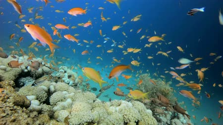 ecosysteem : Colorful Tropical Coral Reefs. Tropical underwater sea fish. Colorful tropical coral reef. Scene reef.  Marine life. Sea world. Underwater fish reef marine. Tropical colorful underwater seascape. Underwater fish garden reef. Reef coral scene. Coral garden