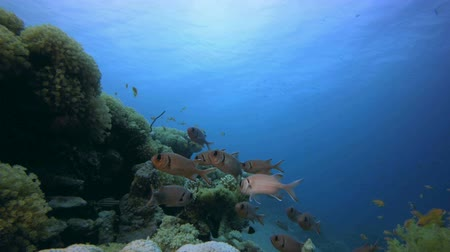 Coral Reef Marine Life. Tropical underwater sea fish. Underwater fish reef marine. Soft and hard corals. Underwater fish garden reef. Reef coral scene. Coral garden seascape. Colourful tropical coral reefs.
