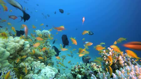 Underwater Scene Marine Life. Tropical underwater sea fishes. Underwater fish reef marine. Tropical colourful underwater seascape. Underwater reef. Reef coral scene. Coral garden seascape. Colourful tropical coral reefs