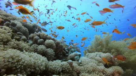 Underwater Tropical Seascape. Tropical underwater sea fishes. Underwater fish reef marine. Tropical colourful underwater seascape. Underwater reef. Reef coral scene. Coral garden seascape. Colourful tropical coral reefs