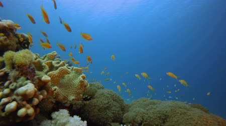 lew : Underwater Scene Colorful World. Tropical underwater sea fish. Underwater fish reef marine. Soft and hard corals. Underwater fish garden reef. Reef coral scene. Coral garden seascape. Colourful tropical coral reefs. Wideo