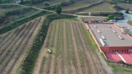 wijnbladeren : Grape bushes grow in a row on the field next to the winery. aerial Stockvideo