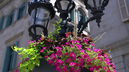 lamppost : Beautiful street lamp with pink flowers. Stock Footage