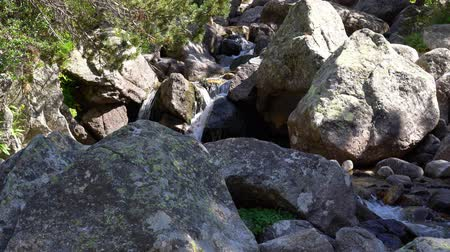 mountain river flows among huge stones in a pine forest