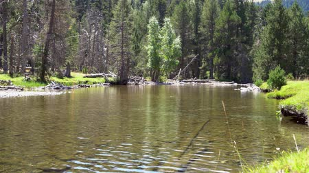 small forest lake in the mountains with clear water Stok Video