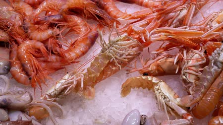 fresh live shrimp lies on ice on a market counter in seaport and moves its paws