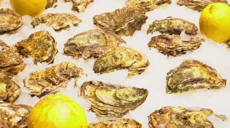 oysters : oysters with lemon on a counter on ice Stock Footage