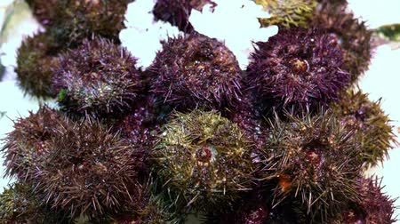 csibész : fresh sea urchins on a market counter in the snow Stock mozgókép