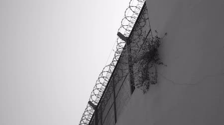 Small tree grows on a prison fence. black and white depressive video