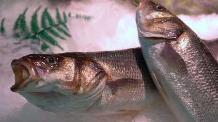Close up of fresh fish on a market counter in the snow. Stok Video