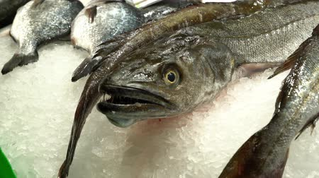 Close up of fresh Hake, Merluza, on a market counter in the snow.
