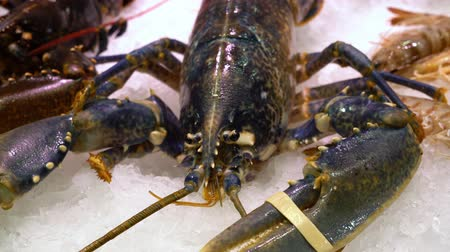 close up of live lobster on the ice market counter. Live lobster with big claws Stock Footage