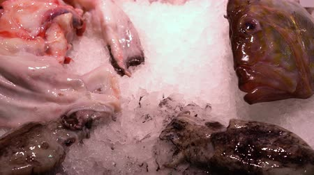 fresh fish and squid on a store counter in snow