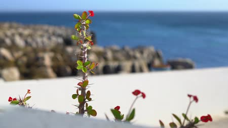 red flower with spikes against ocean on a sunny day