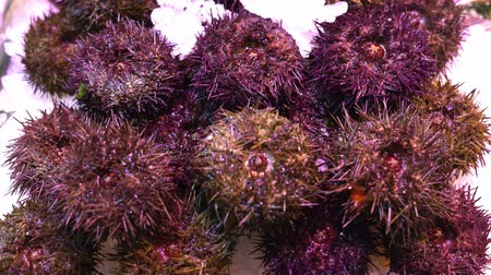 fresh sea urchins on a market counter in the snow. Seafood.