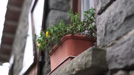ölen : withered flower in pot on windowsill of stone house. Autumn Depression Concept