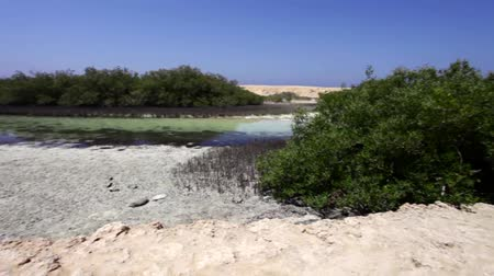 Mangrove Bay in Ras Mohammed National Park, Ägypten. Videos
