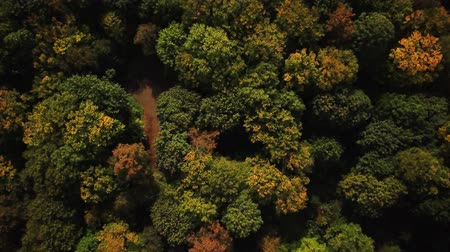 4K HD Aerial view camera zoom in to green forest of dense mixed tree tops of pine trees and birches