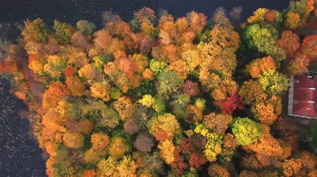 buried treasure : AERIAL Flying over the beautiful autumn Forest and Castle. Flight over beautiful castle; located in landscape park with green trees forests in autumn. 4K Aerial View. Stock Footage