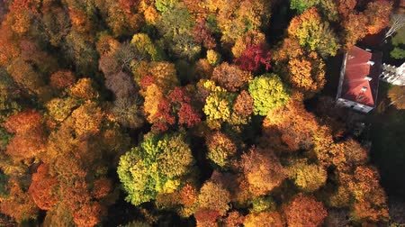 falu : Flying over the beautiful Castle in autumn Forest. Located in landscape park with green trees forests in autumn. 4K Aerial View.