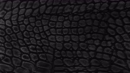 crocodilo : Snake skin background. Close up. 4k  high quality footage. Vídeos