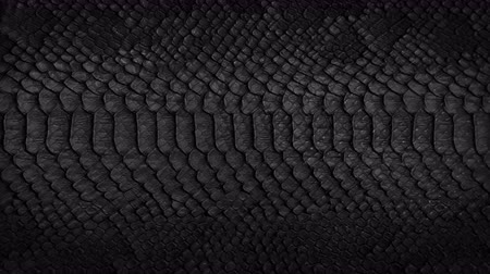 cobra : Snake skin background. Close up. 4k  high quality footage. Vídeos