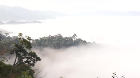 enevoado : Beautiful floating fog landscape in rain forest, Thailand. Vídeos