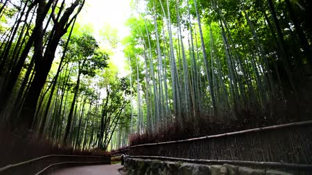 freshness background : Bamboo Forest Stock Footage