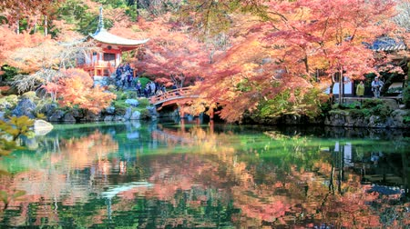 сады : Autumn Japanese garden with maple in Kyoto,Japan