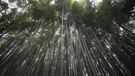 bambusz : The bamboo forest of Kyoto, Japan