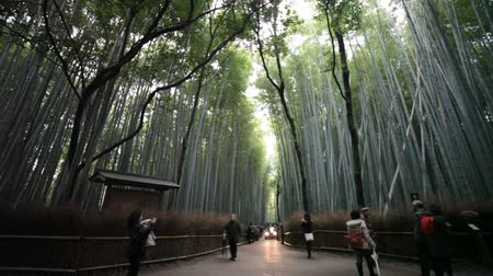 kyoto : The bamboo forest of Kyoto, Japan