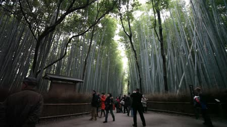 bamboo forest : The bamboo forest of Kyoto, Japan