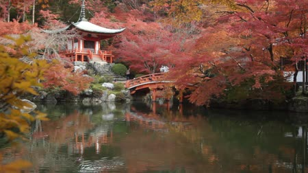 red maple : Autumn at daigoji temple with colorful of maple trees and leaves in a pond around , most beautiful famous place in autumn season at Kyoto ,Japan Stock Footage