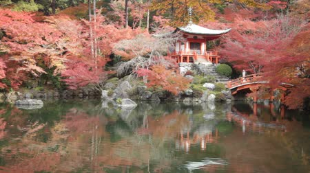 gölcük : Autumn at daigoji temple with colorful of maple trees and leaves in a pond around , most beautiful famous place in autumn season at Kyoto ,Japan Stok Video