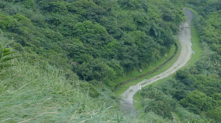 Miscanthus on the Cao Ling Ancient Trail in the northeast corner of Taiwan