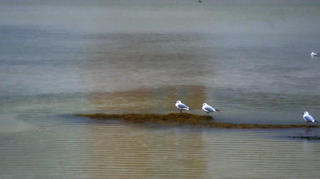 enviroment : 2 seaguls on the beach, park background