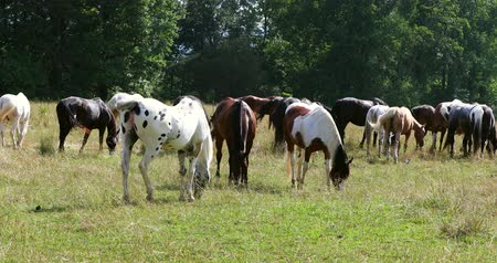 ranč : Herd of horses grazing