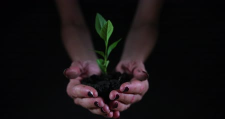 Hands holding plant in soil on black background.
