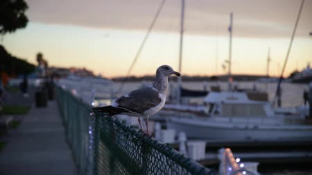 banquinho : Seagull is sitting on a fence and then flying away.