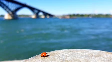 A single ladybug takes shelter on a concrete pylon beside a fast moving river.