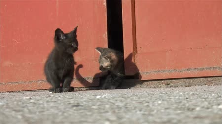 kotě : kittens playing in the yard