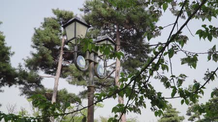 sokak lâmbası direği : Botanical garden with growing red trees and an ancient wooden street lantern with a blurred background