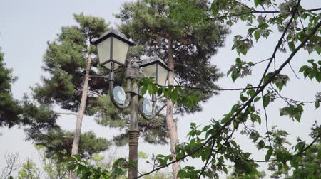 lampioni : Botanical garden with growing red trees and an ancient wooden street lantern with a blurred background